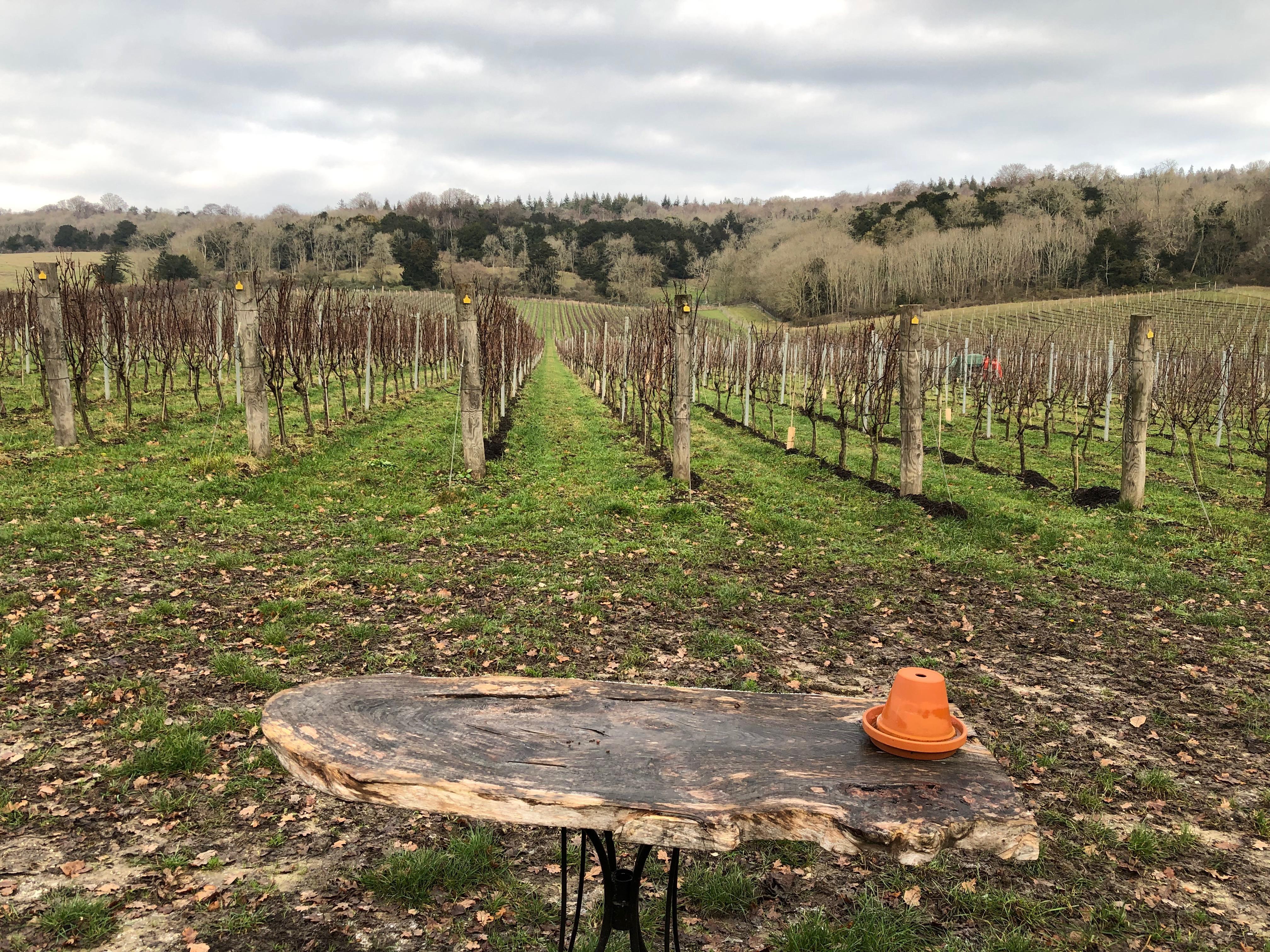 surrey hill wines
